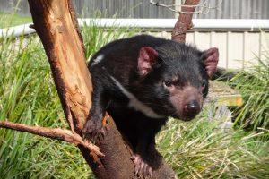 Svijet Tasmanije (video)